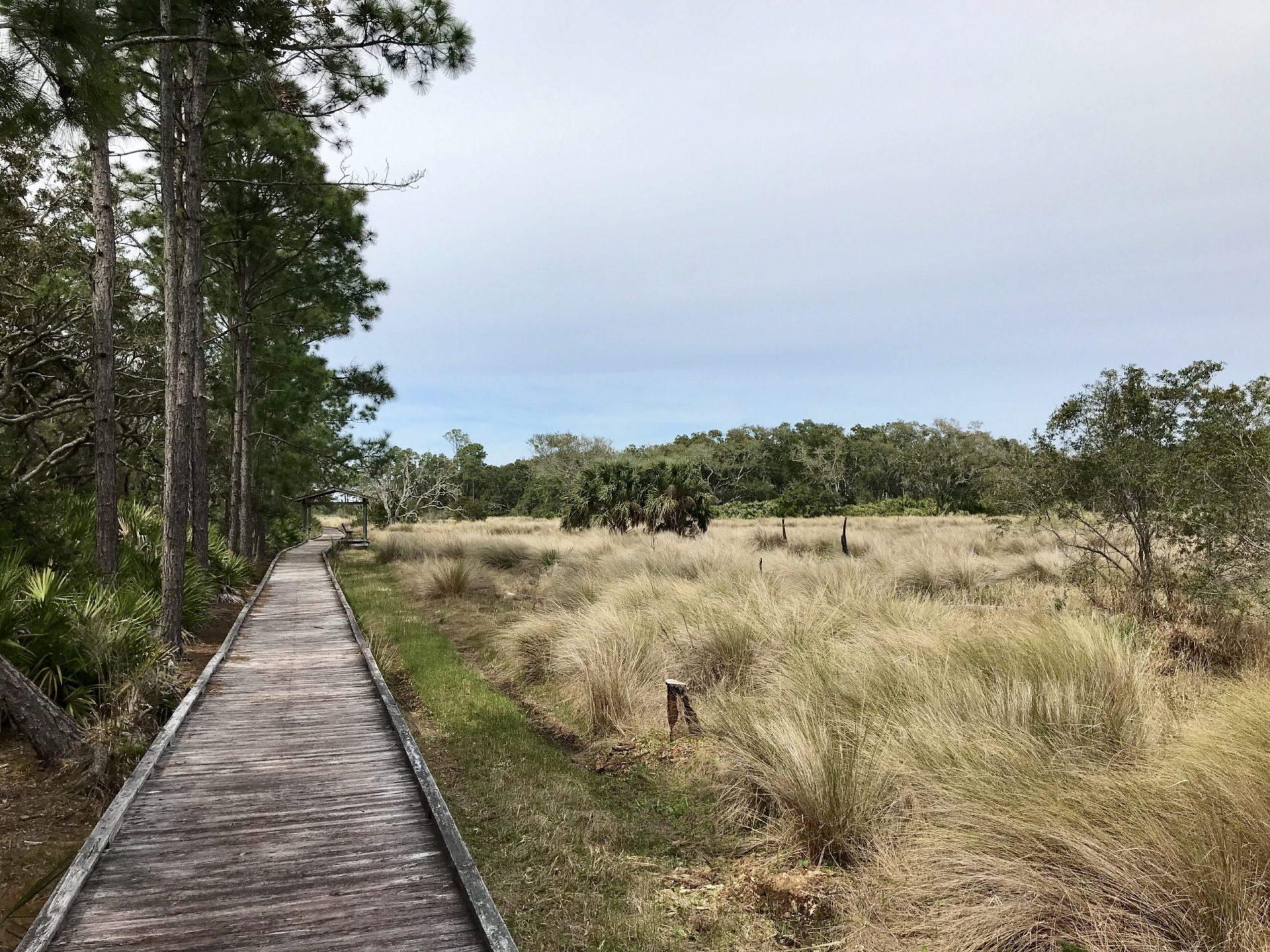trail through marshland